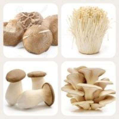 Mushrooms 菇类
